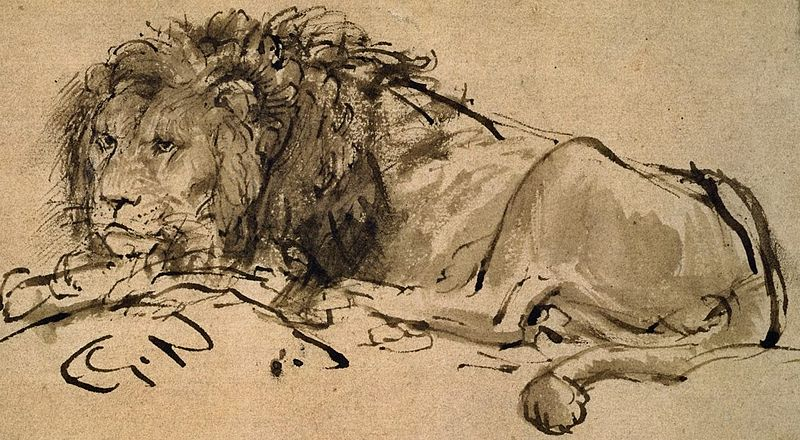 800px-Rembrandt-A-Lion-Lying-Down-207063_detail