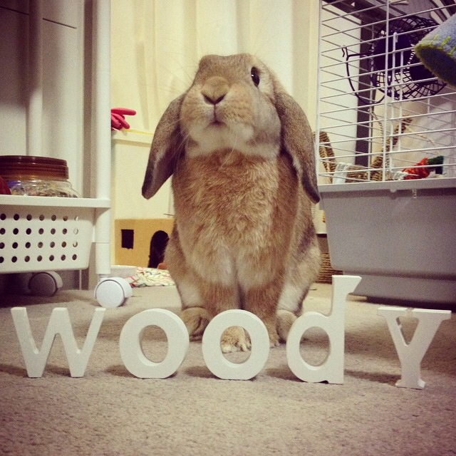 Cuteness of the day - Woody by One Happy Blog